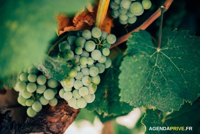 1jour1vin.com : Vente Privée De Vins Et De Champagne