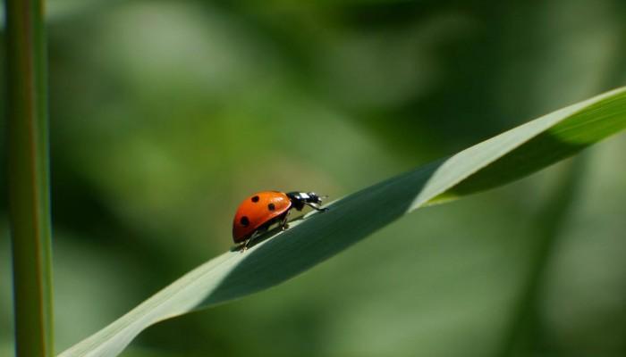 Ventes Vertes : Ventes Privées écologiques, éthiques Et Bio